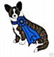 Slash's wins Best of Breed Jeweltone Telltail Razor's Egde @ Walnut Creek Cardigan Welsh Corgi's, Georgia.