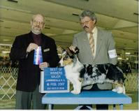 Click here to see AKC Professional Handler site of CJ Favre at Canine Specialist.