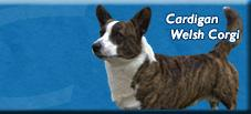 AKC link for the breed standard of the Cardigan Welsh Corgi....