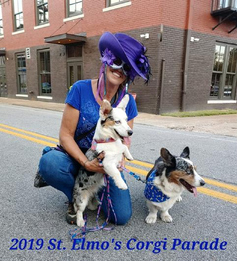 , 2019 st. Elmo's Corgi parade Chattanooga Tennessee, Laura Adams with her to Cardigan Welsh Corgis AKC Champion Jason when's the award for oldest Corgi 14 years old beautiful Crystal chason's granddaughter wins biggest ears had a good time thanks everyone see you next year