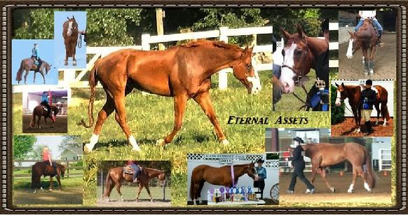 Eternal Assets~ APHA/PtHA Allround Show Horse 4$ale at Walnut Creek Farm, Seymour, Knoxville, Maryville, Tn